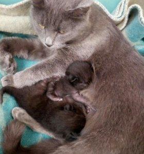 Отдам в добрые руки котят мальчик и девочка