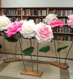 Большие цветы, огромные цветы розы, ростовые цветы