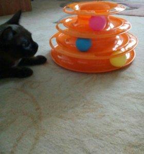 Горка игрушка для кошек