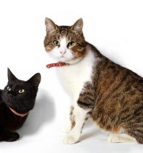 Кот и кошечка ищут свою семью (стерилизованы)