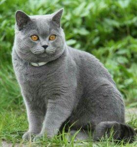 Котик