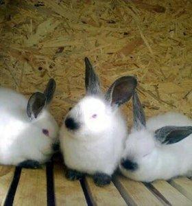 """Кролики""""Калифорнийские"""""""