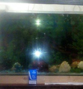 Аквариум с рыбками ( гупешки )