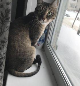 Кот серый и рыжий