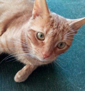 Рыжий кот в дар
