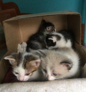 Срочно отдаются котята в добрые руки