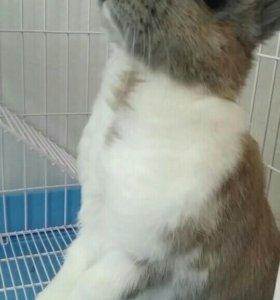 Отдам декоративного кролика в добрые руки