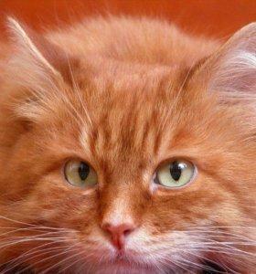 Рыжая кошечка или котик