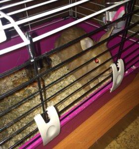 Кролик декоративный с клеткой4мес