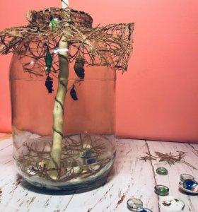 Необычный подарок -домашний бабочкарий