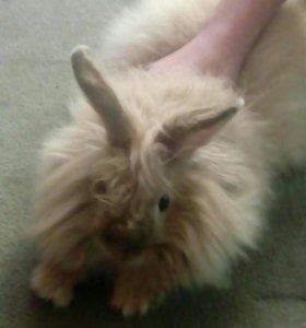 Купите кролика :)