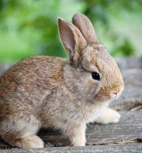 продам крольчат фр.баран+великан