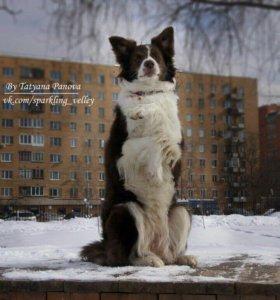 Прогулка с мелкими породами собак