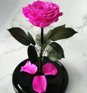 Живая роза в колбе,Розовая!