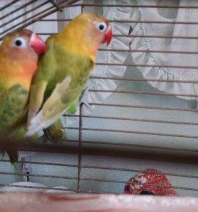 Попугаи и другие птицы.