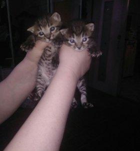 Котята мальчики