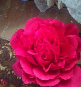 Ростовые цветы для интерьера