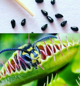 Семена хищных насекомоядных растений
