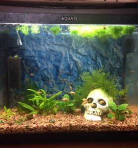 Действующий аквариум продам
