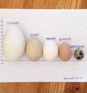 Яйцо фермерское домашнее