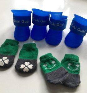 Ботинки и носки для маленьких собак