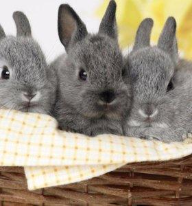 продам кроликов, мясо.