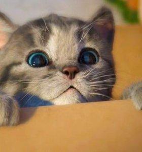 Передержка кошек/котят