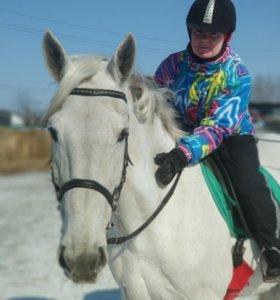 Лошади для фотосессий