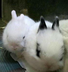 Много карликовых крольчат