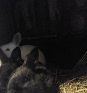 Кролики Мясо крольчатина