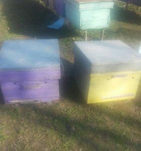 пчелы и улья