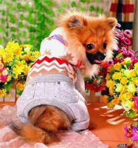 теплые комбинезоны костюмы для собак мелких пород