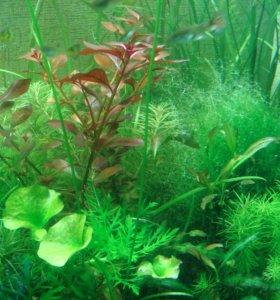 Растения для аквариума,креветки и многое другое