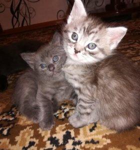 Красивые котятки