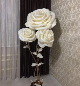 Гигантские розы 🌹