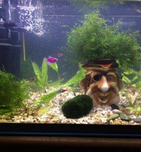 Мох растение 🌱 в аквариум
