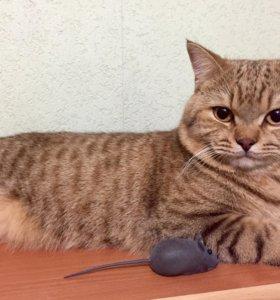 Вязка, кот ищет кошечку