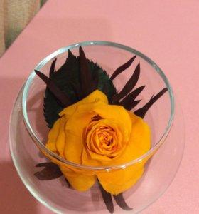 композиции из живых, стабилизированных цветов