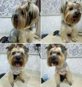 Стрижка собак у Анастасии