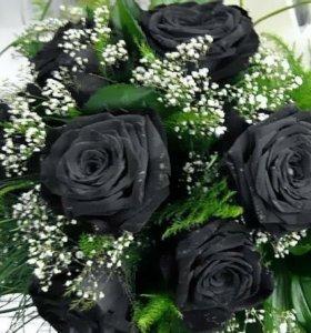 Семена черной розы