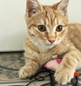 Котёнок Тиграш
