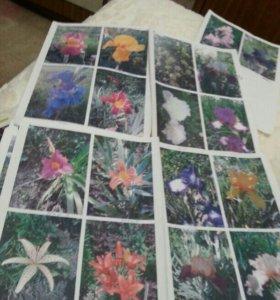 Цветы от 50 рублей