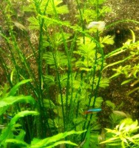 Аквариумные растения от