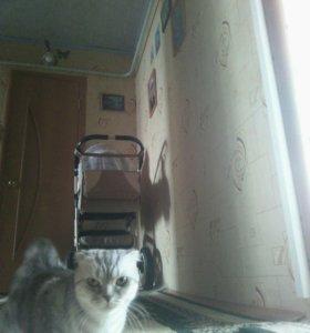 Вязка кошки с котом