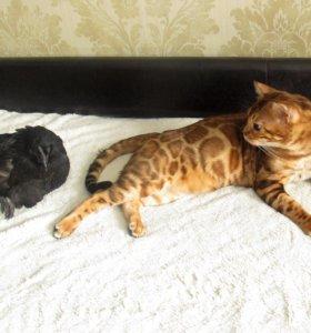 Котик для вязки.