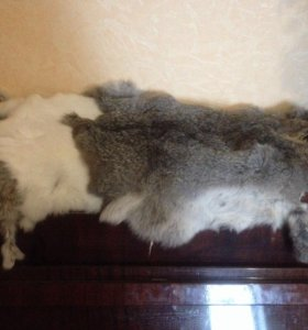 Шкурки кролика