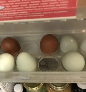 Яйцо куриное перепелиное домашнее