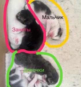 Котята ангоры 13.03