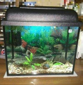Красивый,готовый аквариум!