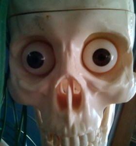 Скелет Артемка